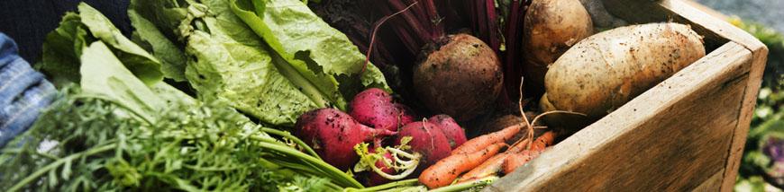 Immagine testata sezione Vendita online prodotti biologici