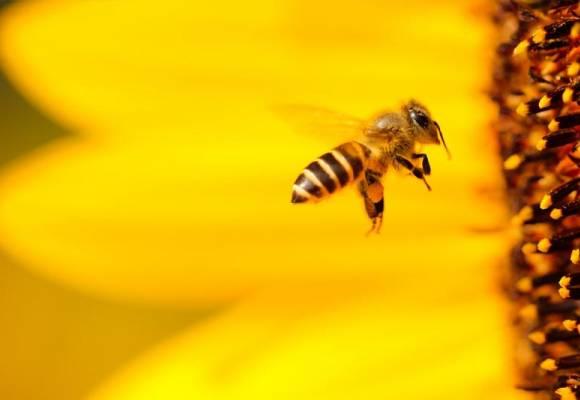 Perchè il miele si cristallizza e diventa solido ?